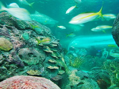 20180526_160925 (giltay) Tags: tube fish