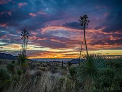The Tularosa Basin (Photography by Mark Hall) Tags: x1d hasselblad