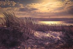 Northward (Ro Cafe) Tags: seascape landscape sunset beach sand sea sky clouds sun sunlight sunshine grass birds seagulls nobody quite serene nikkor2470f28 nikond600 summer