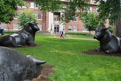 University of Minnesota Twin Cities (doug dibble) Tags: stpaulcows cows umn umnproud universityofminnesota universityofminnesotatwincities university stpaul minneapolis minnesota campus statue dairy haeckerhall college collegecampus