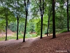 Veluwezoom, 22-7-2018 (kees.stoof) Tags: rheden veluwezoom natuur nature landschap landscape bos