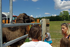 26.7.18 Chynov and camels 22 (donald judge) Tags: czechia south bohemia toulava chynov zahostice camels
