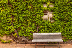 Window Disappearing - HWW! (suzanne~) Tags: ivy vine window shutter bench germany bavaria