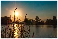 Dernier soir de juin (Pascale_seg) Tags: landscape paysage river riverscape étang soir crépuscule soleil sundown sunset coucherdesoleil moselle lorraine grandest france nikon tree sky evening eveninglight fleurs flowers