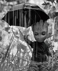 Damp Groot (Jezbags) Tags: groot iamgroot avengers guardiansofthegalaxy macro macrophotography macrodreams canon canon80d 80d 100mm rain blackwhite umbrella hottoys toy toys sad grey