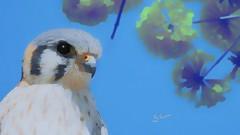 QUIRIQUIRI - American Kestrel (sileneandrade10) Tags: sileneandrade quiriquiri falcão falcãoamericano pássaro animal ave cerrado nikon nikoncoolpixp900 nature natureza photoedition photoart arte