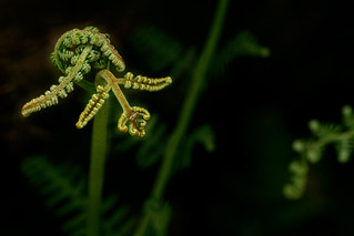 Fern flection