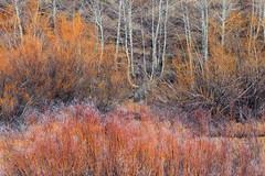 Autumn's Palette (photography by Derek G) Tags: trees color autumn abstract sage sagebrush bramble thicket aspen willow fall season winter cold chill wisdom nature likeapainting easternsierras