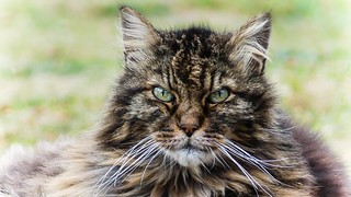 Very Old Cat - 5525
