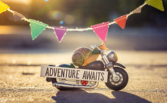 adventure awaits (auntneecey) Tags: adventureawaits snail text texture words motorcycle sunflare goldenhour thesecretlifeofsnails snailtales 365the2018edition 3652018 day194365 13jul18