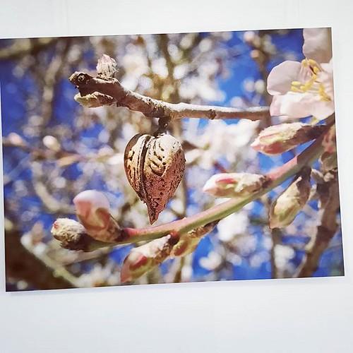 Guten Morgen & einen schönen Start in die Woche 😎 jetzt als Grossdruck im Space: Rainers Mandelherzfoto 💙 . . . #mandelherz #mandelblüte #mallorcagram #mallorca #rayaworx #santanyi #flowerstagram #treesofinstagram #almonds #mandeln