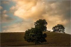 Drei Kumpels warten auf Regen (linke64) Tags: thüringen deutschland germany natur landschaft bäume wiese gras himmel wolken hügel