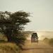 Safari day 2 Serengeti