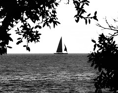 19 july 2018 - photo a day (slava eremin) Tags: 365 1day photoaday dailyphoto boat sail sea bw blackandwhite monochrome blanconegro bianconero