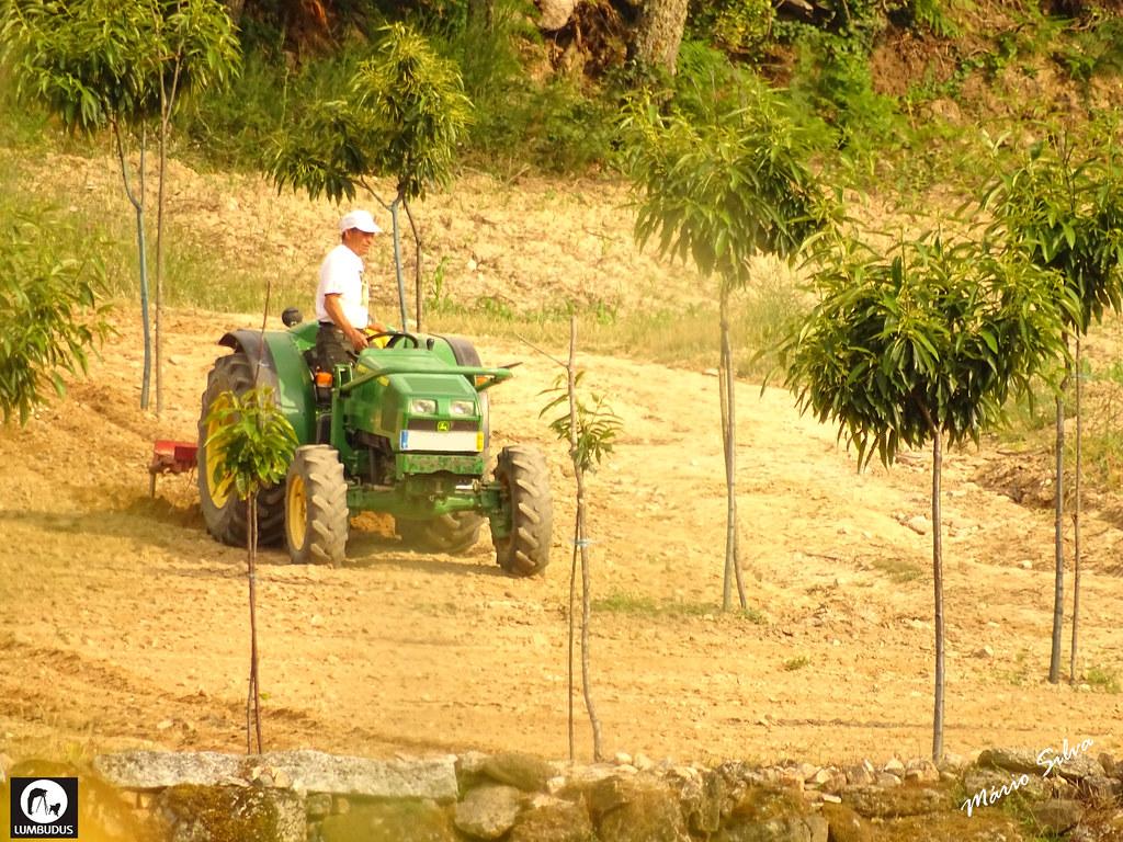 Águas Frias (Chaves) - ... experiente agricultor conduzindo o seu trator de pé para verificar se o resultado estava a ser o que idealizara ...