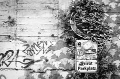 Tarnfleck (chipsmitmayo) Tags: minolta xd7 rokkor 50mm f14 adox adotech cms 20 selbstentwickelt schwarzweiss blackandwhite bw film analog münster westfalen fünfzig fiddy schild sign parkplatz efeu wand wall sticker