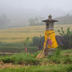 Bali - A land of temples and rice paddies (Ged Slaughter Photography) Tags: jatiluwih rice riceterraces bali gedslaughter travel explore