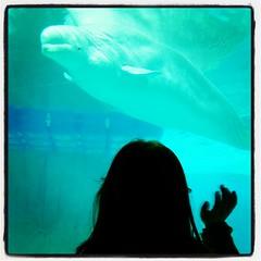 miri and the beluga (Maluni) Tags: valencia espana spagna spain acquario acquarium water acqua sea mare beluga
