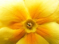 Yellow Center (Stanley Zimny (Thank You for 32 Million views)) Tags: flower bronx botanical garden ny macro yellow