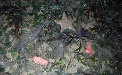 Various marine life on Changi Beach (wildsingapore) Tags: changi carpark1 shore island singapore marine coastal intertidal seashore marinelife nature wildlife underwater wildsingapore