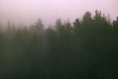 SAM_2931-2 (Apostol Dragiev) Tags: родопи rodopimountain rodopi mountain forest fog