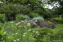 Bleu, Blanc, Rouge (Ezzo33) Tags: france gironde nouvelleaquitaine bordeaux ezzo33 nammour ezzat sony rx10m3 parc jardin fleur fleurs flower flowers red rouge bleu blanc white