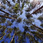 Wald von unten thumbnail