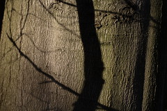 In the Bark (luci_smid) Tags: bark inspiration paintings pattern tree branches screen projection forest mystery impression