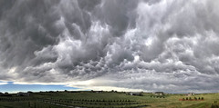 Angry Skies...Not (northern_nights) Tags: mammatus clouds sky weather cloudscape panorama cheyenne wyoming pano