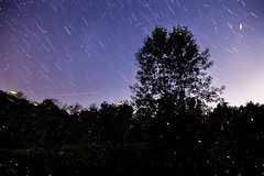 Nature's Nightlights (Elyssa Drivas) Tags: sky sunset stars startrails silhouette forest dusk night nightphotography nightscape nightshooters nightlife nightsky nightlight upstate upsatenewyork newyork nature longexposure landscape landscapephotography