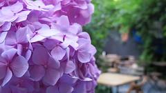(bobbat) Tags: kraków cracow kazimierz jewishquarter synagogue cafe garden poland