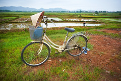 Bicycle parked near rice paddies (BryonLippincott) Tags: asia asian southeastasia vn vietnam vietnamese vietnameseculture countryside farm farming hanoi agriculture rural ruralscene farmscene farmland rice ricepaddy paddy mountains fog haze houses country industry production growing flooded community mud water fields landscape rurallandscape bicycle vietnamesehat hat parked