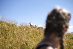 Face To Face (CoolMcFlash) Tags: sheep animal person woman focus dof depthoffield looking rural nature scenics austria fokus fujifilm xt2 österreich steiermark styria schaf tier frau tiefenschärfe schauen ländlich mountain berg hill fotografie photography xf35mmf14 r