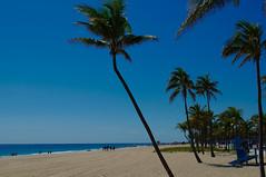 Florida beaches (Bokeh & Travel) Tags: fl usa beach beautiful palmtrees palms sand blue sky seascape landscape seasideview sea miamibeach fort lauderdale ftlauderdale miami fortlauderdale vacation florida surfing