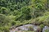 Cachoeira na mata (Márcia Valle) Tags: interiordobrasil santanadodeserto natureza nature brasil outono autumn green verde trees árvores mataatlântica márciavalle nikon d5100