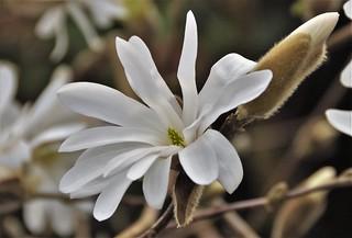 Beauty among the Magnolias