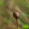 Lollipop Snail (microwyred) Tags: crawling nature gastropod outdoors places greencolor slow mollusk animal slimy slug wildlife animalshell macro insects butterfly chaddesleywoods brown spiral closeup snail escargot events insect invertebrate