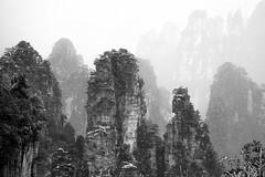 Zhangjiajie National Park (virtualwayfarer) Tags: zhangjiajieshi hunansheng china cn avatar hallelujahmountain zhangjiajie nationalpark nationalforestpark unesco unescoworldheritage worldheritagesite nature wildlife naturephotography dramaticnature landscape dramaticlandscape spires chinese visitchina visithunan hunanprovince incrediblenature lateafternoon cliff cliffs pandora pandoramountains mountains karstformation winter snow snowy naturalwonder republicofchina mistymountains mist 張家界 scenery pillar blackandwhite blackandwhitephotography alexberger virtualwayfarer sonya7rii sonyalpha