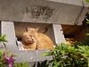 日向ぼっこ (sunbathing) (Paul_ (shin.ogata)) Tags: 猫 ネコ ねこ