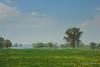 de-Maas-bij-Lith-op-zondagmorgen (Don Pedro de Carrion de los Condes !) Tags: donpedro d700 lente landschap rivier rivierbedding maaslameuse lith oss uiterwaard nevel uitzicht paardebloemen sfeer mood dromerig