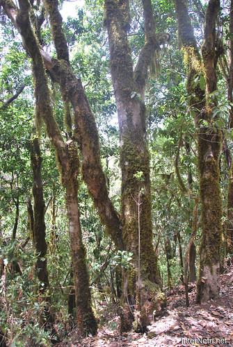 Національний парк Гарахонай, Гомера, Канарські острови  InterNetri  0725