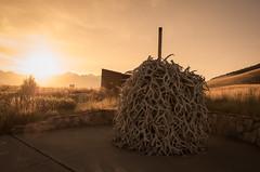 National Bison Range (Ryan_Hasselbach) Tags: bison montana wildlife sunrise usa america landscape antlers mountains range scenery sky nikon d7000