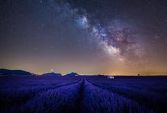 Pink Milky Way (martinsilvestri90) Tags: france frankreich lavendel lavender field house haus steinhaus milchstrasse milkyway milky way stars sterne pink duft nachtfotografie nacht night nikon d5300 tokina nachführung startracker vixen valensole provence riez