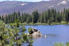 Hume Lake, King's Canyon, California, US August 2017 018 (tango-) Tags: unitedstates america us usa statiuniti