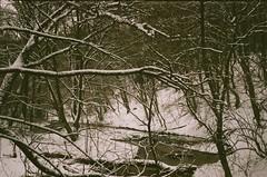(szmenazsófi) Tags: forest trees tree film analog analogue 35mm smena smenasymbol lomo lomosmena börzsöny hungary magyarország kéktúra országoskéktúra winter hike hiking outdoor snow nature
