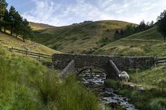 Packhorse Bridge (l4ts) Tags: landscape derbyshire peakdistrict darkpeak valeofedale kinderscout jacobsladder packhorsebridge rivernoe sheep edalehead