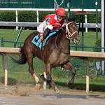 Churchill Downs Race: Major Perfection crosses the finish line thumbnail