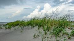 Beach Grass and Clouds (APGougePhotography) Tags: beach grass folly follybeach southcarolina south carolina sc coast coastal clouds cloudsstormssunsetssunrises nikon nikond800 d800 sirui tripod charleston low country lowcountry