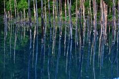 Aoi-ike (Myajima) Tags: japon japan hokkaido bien aoiike etang pond arbres trees 日本