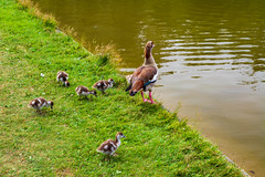 Karlsruhe Palace pond ducks (Brian Out and About) Tags: nikon d5200 ©brianblair2018 karlsruhe palace ponds ducks nature ngc europe germany explore